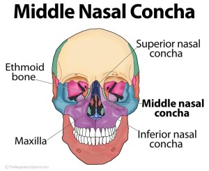 Middle Nasal Concha