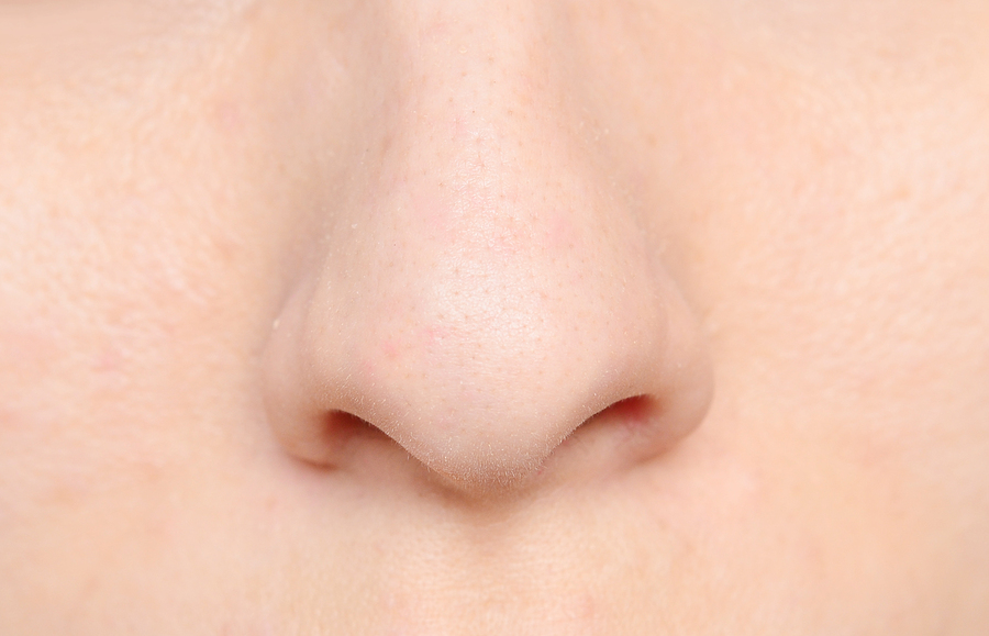 nose definition  anatomy  functions  diagram